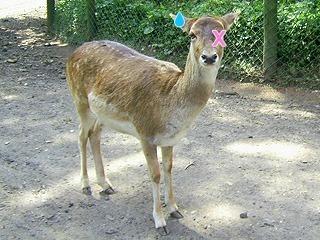 zoosafari081ia3