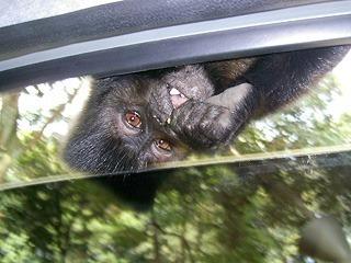 zoosafari108jq7