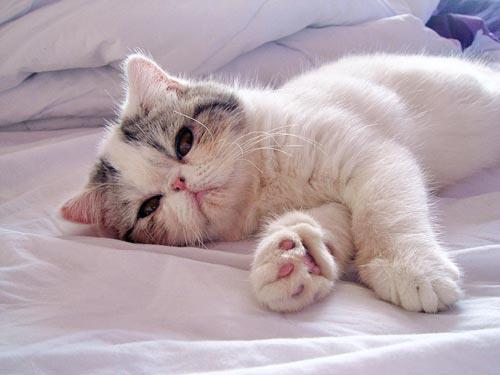 kitty003np9