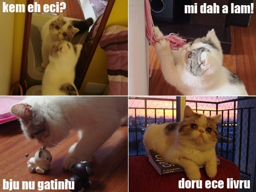 lolcats004hy3