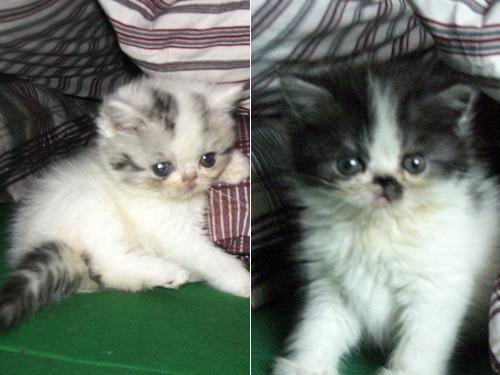 kittenskk1