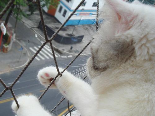 kittyliberdadeas6