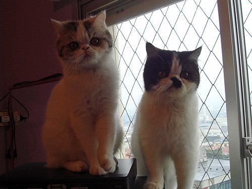 Kitty e Mimmy