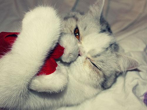 gatos-natal003