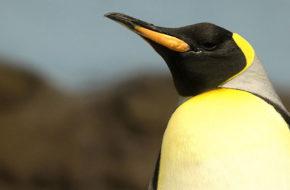 Flórida: Aquatica e Sea World (SeaWorld Parks)