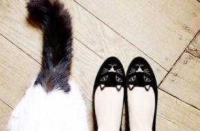 Desejo do dia: Sapatilha de gatinho
