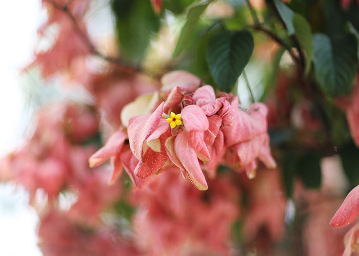 lookdodia252-flor