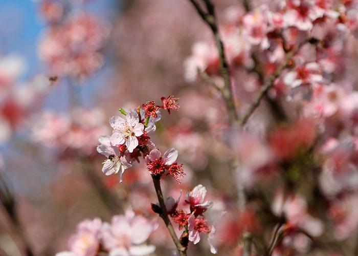 lookdodia312-flores