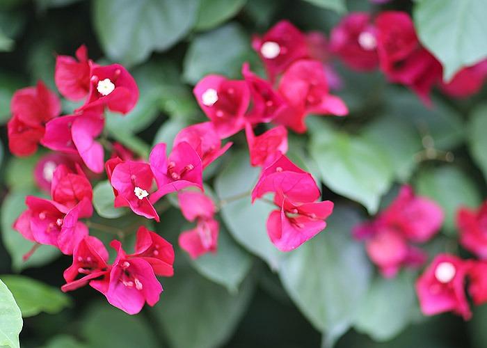 lookdodia328-flor