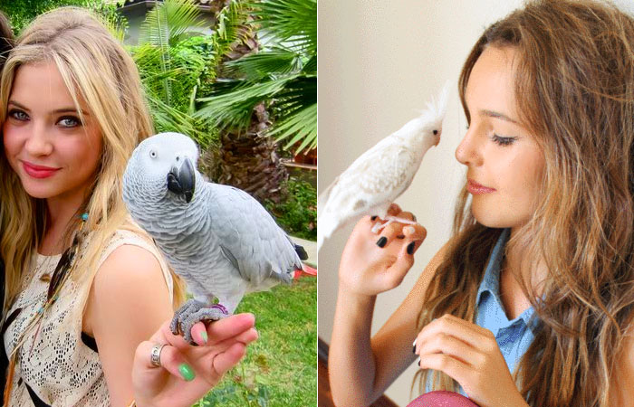 animais-de-estimacao-pets-aves-papagaio-calopsita