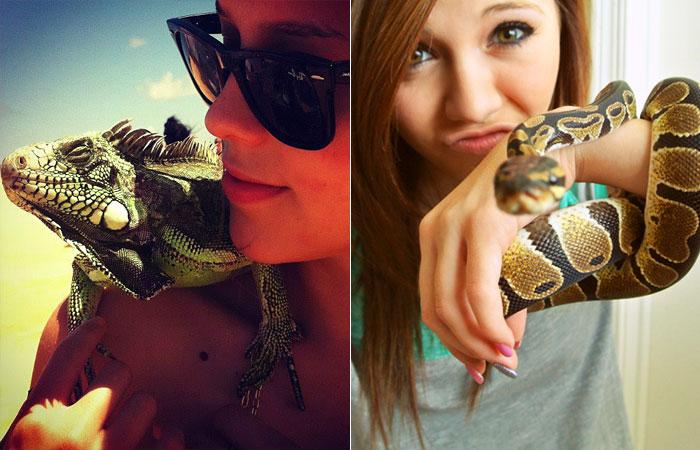 animais-de-estimacao-pets-repteis-iguana-cobra