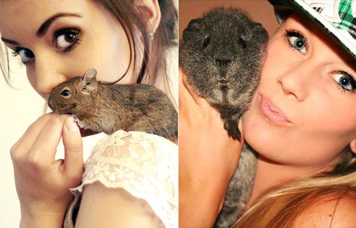 animais-de-estimacao-pets-roedores-hamster-porquinho-da-india