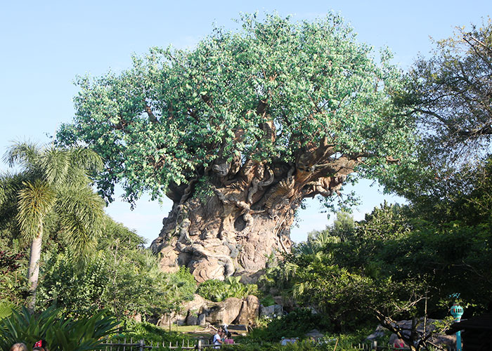 animal-kingdom-013
