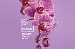 Orquídea Radiante é a cor de 2014