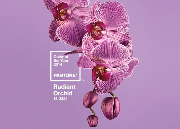 orquidea-radiante-cor-2014