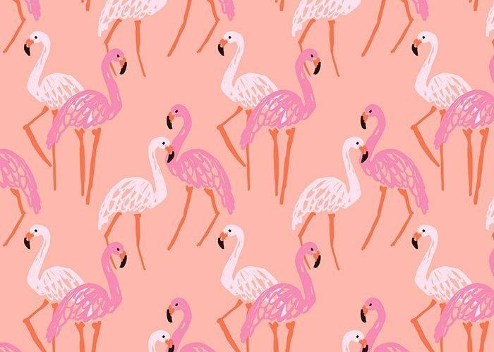 a-flamingo