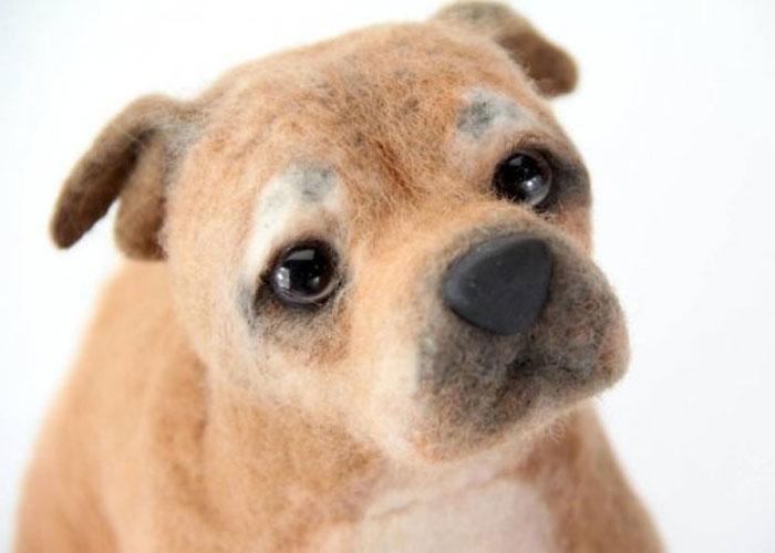 inspiracao-cachorrosdepelucia-shelterpups-boomer