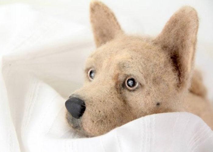 inspiracao-cachorrosdepelucia-shelterpups-laneys