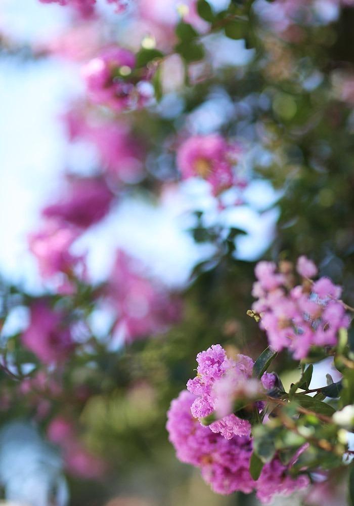 lookdodia352-flor