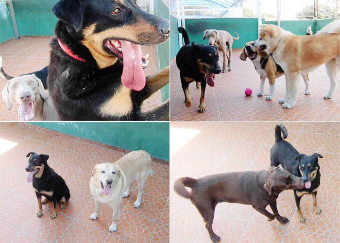 dora-hotel-cachorros-001