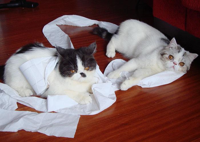 gato-papel-higienico-001