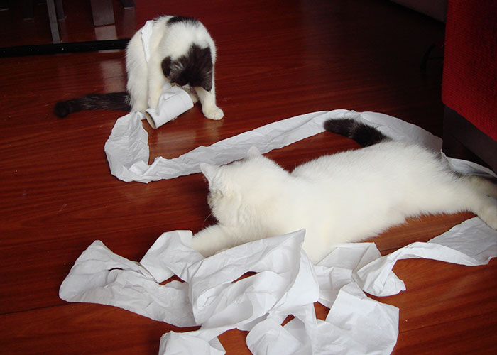 gato-papel-higienico-002