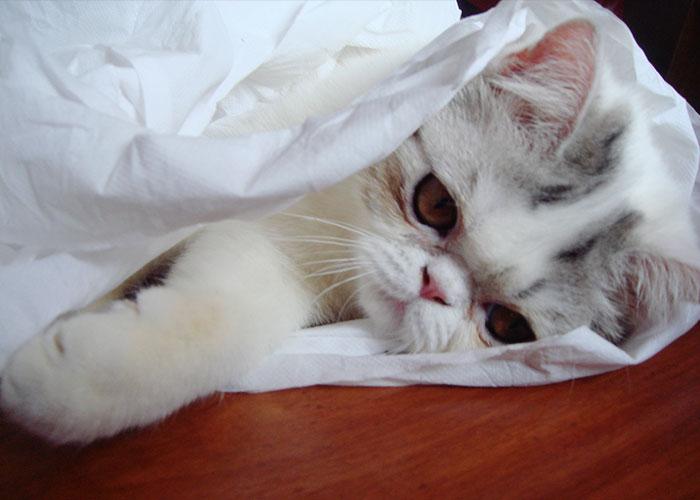 gato-papel-higienico-003