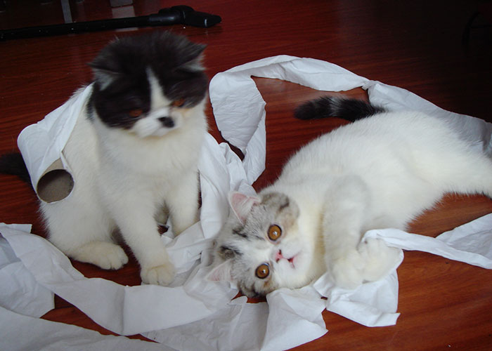 gato-papel-higienico-004