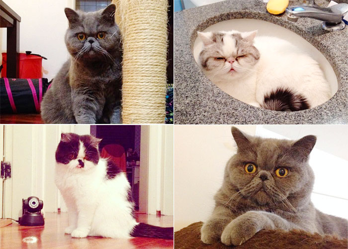 gatos-catsitter