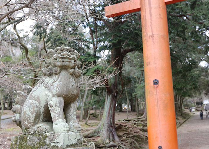 viagem-japao-nara-027