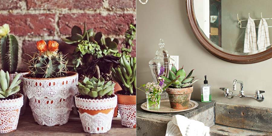 decoracao-plantas-suculentas-003