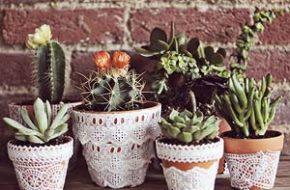 Decoração: Plantas suculentas