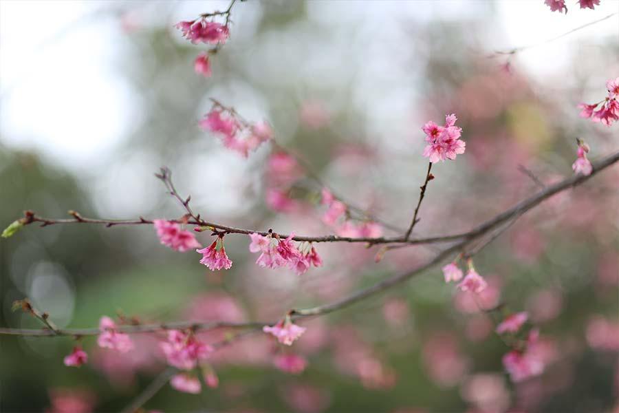 lookdodia396-flores