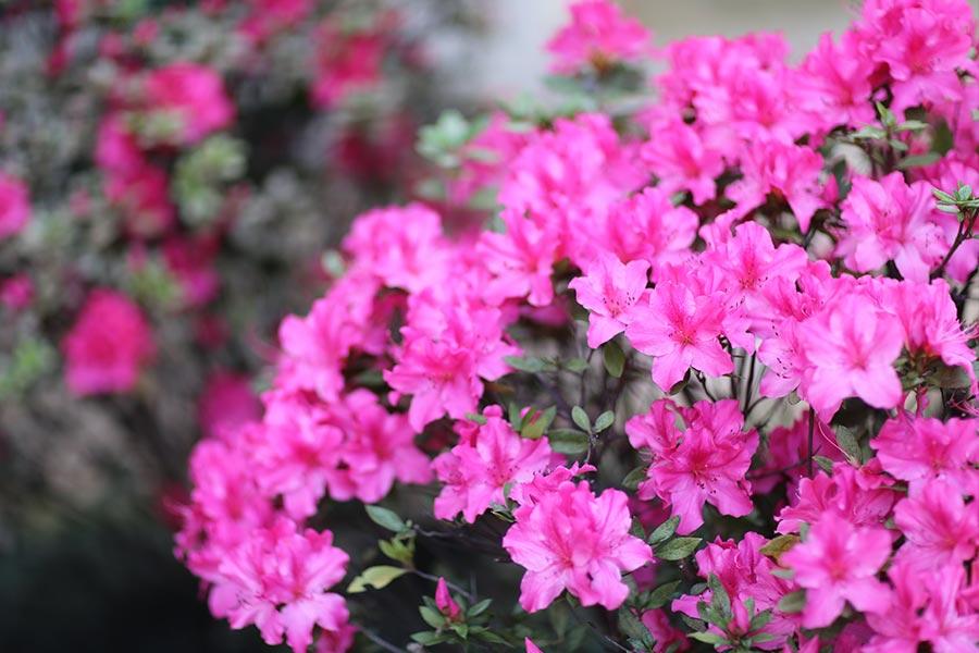 lookdodia399-flores