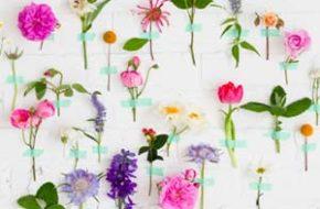 Decoração: Flores