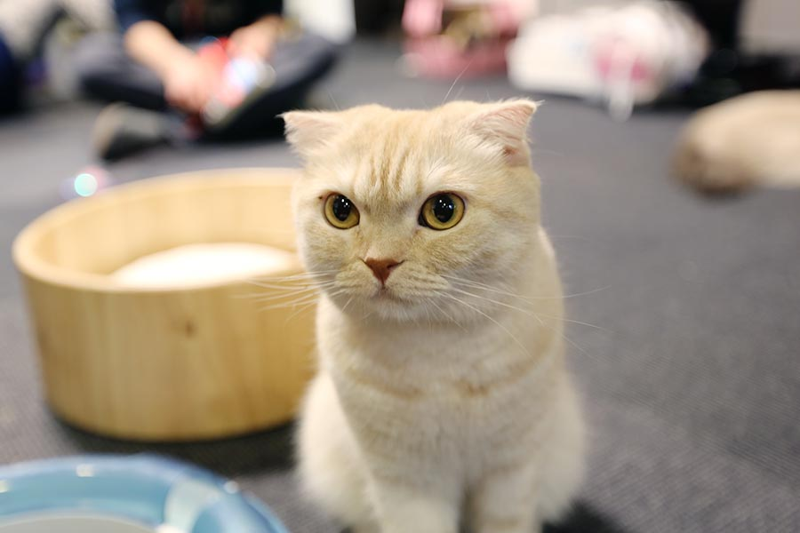 viagem-japao-cat-cafe-003