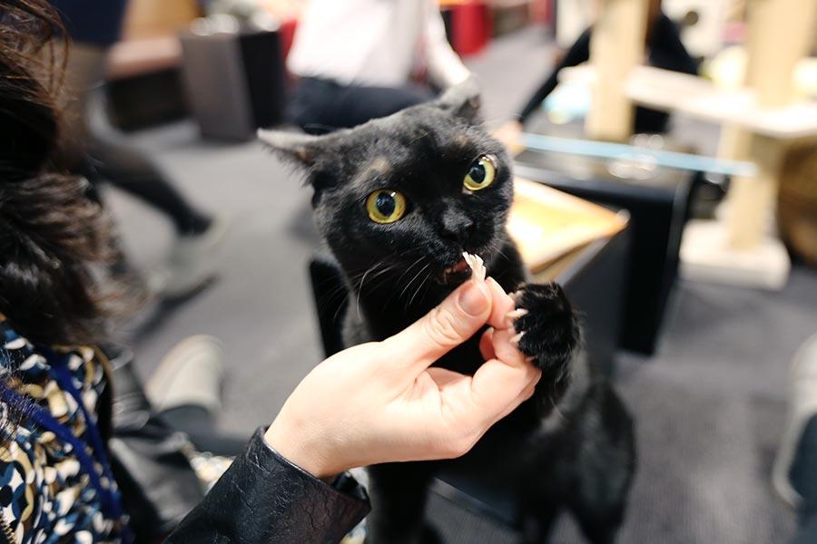 viagem-japao-cat-cafe-008