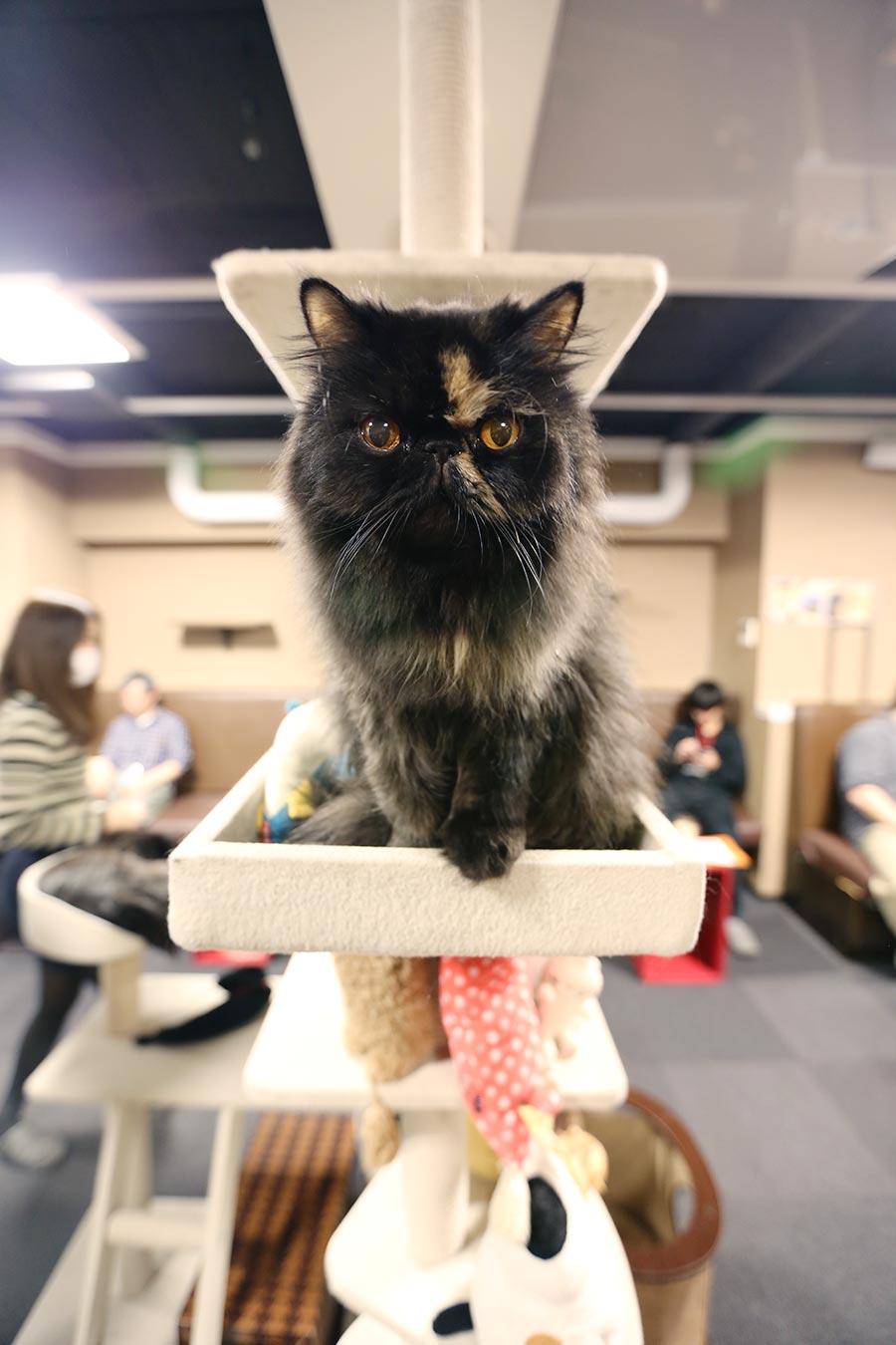viagem-japao-cat-cafe-013