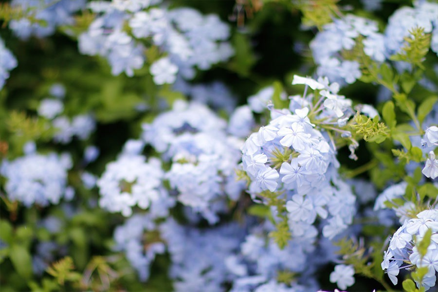 lookdodia421-flores