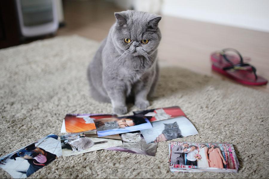 album-de-fotografia-006