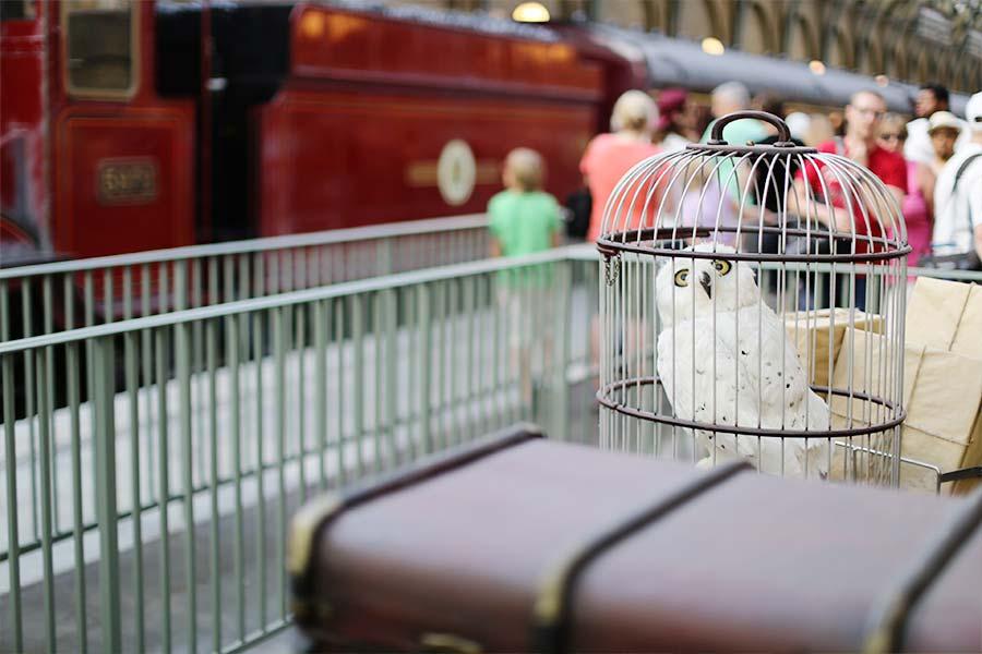 Edwiges na estação
