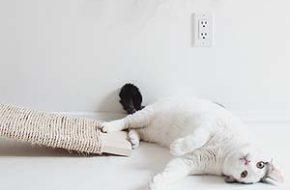 Decoração: Itens para gatos (faça-você-mesma)