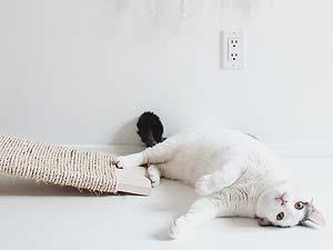 Decoração: Itens para gatos (faça-você-mesma) - Just Lia | Por Lia Camargo