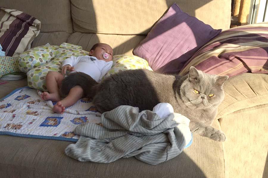 gatos-e-bebe-001