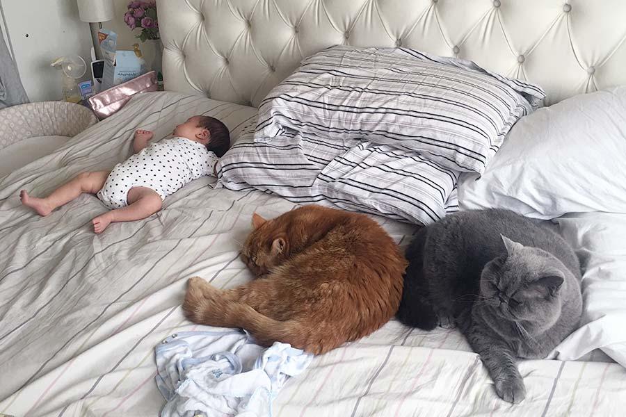 gatos-e-bebe-002