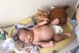 Os gatos e o bebê