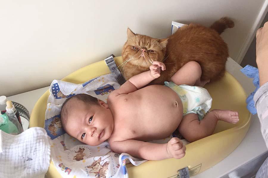 gatos-e-bebe-003